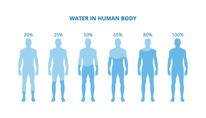Water in human body - health poster with differently hydrated bodies