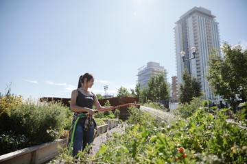 Young woman with hose watering vegetable plants in sunny, urban community garden