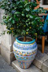 lemon tree in a decorative flower pot
