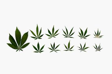 Knolling of marijuana leaves