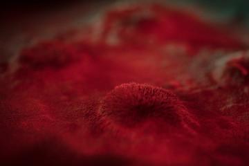 Microscopic red virus spore growth