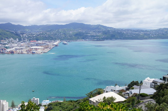 Bay View from Mt. Victoria in Wellington, New Zealand