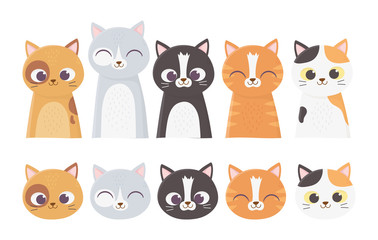 pet cats faces differents feline breed cartoon