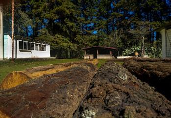 Troncos con una cabaña en el fondo y una casa blanca a lado y pinos Wall mural