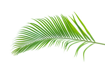 Door stickers Palm tree green palm leaf isolated on white background