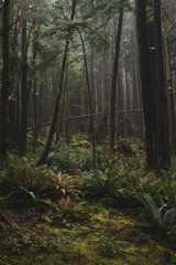Deep Dark Lush Green Dreamy Coastal Rainforest