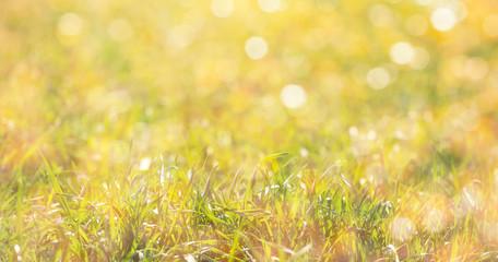 Deurstickers Landschappen Bright green natural grass in the sunlight.