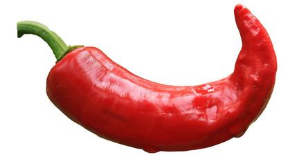 Chilli Pepper Chilli Pepper Red Chili Paprika