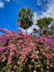 Fototapete - Tropischer Strauch in Blüte