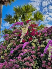 Wall Mural - Tropischer Strauch in Blüte