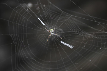 spider  resting on the web