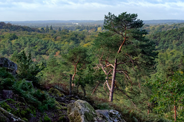 Fontainebleau forest hills  in the french Gâtinais regional nature park