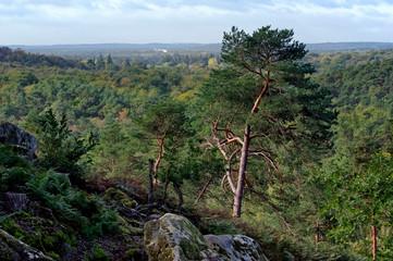 Spoed Foto op Canvas Khaki Fontainebleau forest hills in the french Gâtinais regional nature park