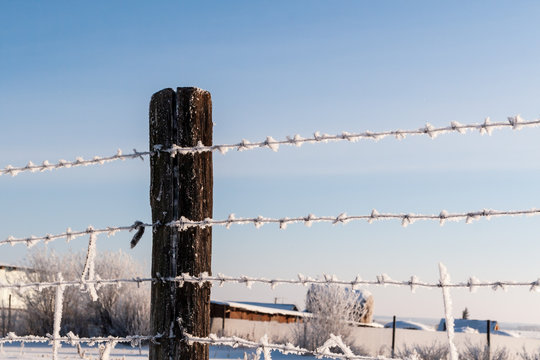 Barbed wire on a winter day in the countryside. Frosty barbed wire.