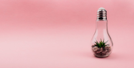 Aloe plant and rocks in glass light bulb creative decoration on pastel pink background with copy space. Indoor terrarium. Minimal banner template for web, social media, advertising. Stock photo. Wall mural