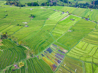 Foto op Canvas Pistache Aerial top view of rice terraces. Agricultural landscape of north Bali from drone. Jatiluwih Rice terraces UNESCO World Heritage. Bali, Indonesia. Travel - image.