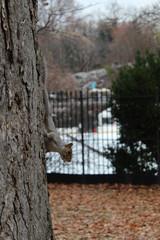 Squirrel , funny