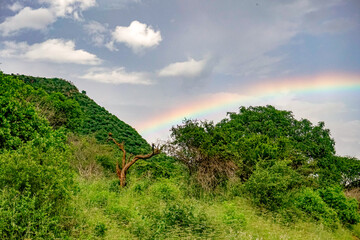 Landschaftsbilder aus dem Nationalpark Tsavo Ost Tsavo West und Amboseli Wall mural