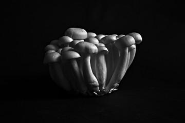Cluster of asian shimeji mushrooms
