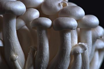 Close up of asian shimeji mushrooms
