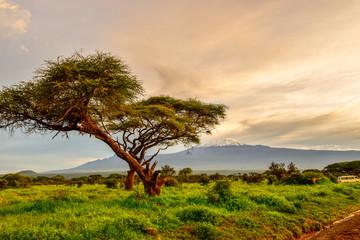 Bilder von dem Schneebedeckten Kilimandscharo in Tansania