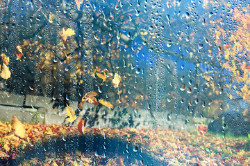 Foto op Textielframe Zwavel geel rain window autumn park branches leaves yellow / abstract autumn background, landscape in a rainy window, weather October rain