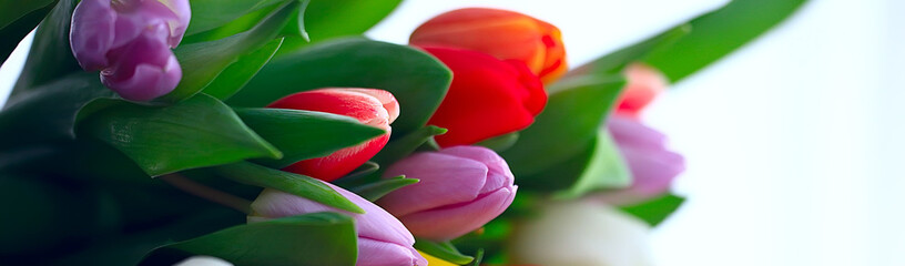 bouquet of colorful tulips / spring flowers, bright beautiful flowers, spring gift concept