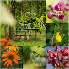 Collage of different flowers in the summer garden