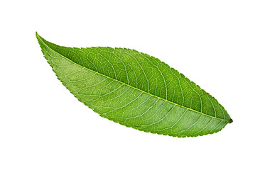 Fototapete - Peach leaf isolated on white background