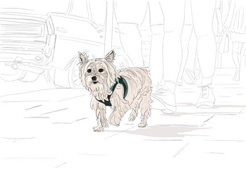 Hand drawn illustration. A cute Yorkshire Terrier (Yorkie) dog goes for a walk on a city street. Black and white except for the Yorkie.