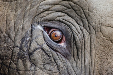 Deurstickers Olifant eye of an elephant