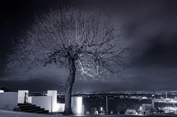 Piękne drzewo z rozłożystą koroną na tle miasta nocą
