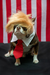Dog with orange wig and red tie.