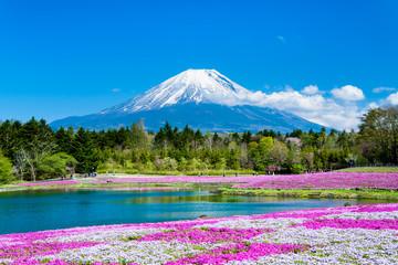 富士山と麓に広がる芝桜の花畑のコラボ風景