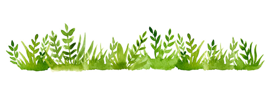 Watercolor green grass isolated on white background.