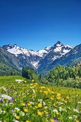 Wall Murals Alps Alpen, Blumenwiese in den Bergen mit Schnee auf Gipfel