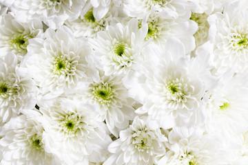 white flowers, closeup