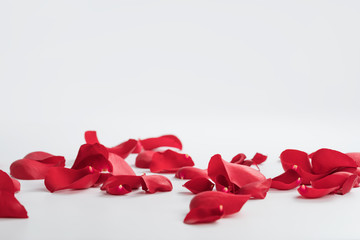 Printed roller blinds Roses Red rose petals on white background