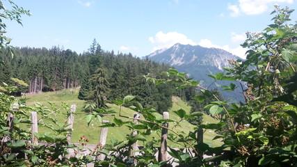 Spoed Foto op Canvas Khaki vineyard in the mountains