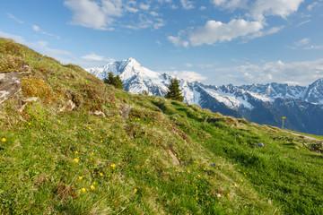 Fototapete - Schneebedeckter Berg hinter einer Bergwiese im Frühling im Zillertal