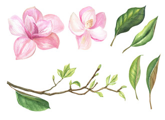 set of isolated images of a Magnolia branch, leaves, flowers on a white background, watercolor