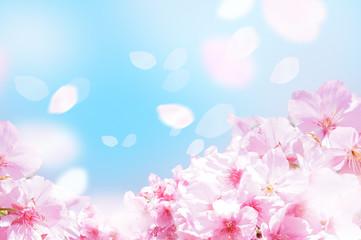 Fotobehang Kersenbloesem 桜がふわふわ舞い降りる