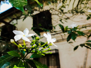 white flower on the tree on a sunny day