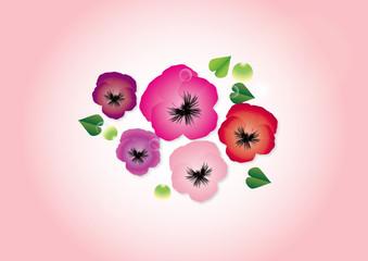パンジー春の花ピンク系の花びらのイラストピンク背景素材