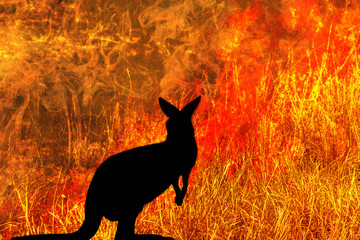 Wall Mural - kangaroo silhouette looking a fire in Australia forests. Australian wildlife in bushfires 2019 and 2020. Conceptual: save kangaroos, global warming, natural disaster, climate change.