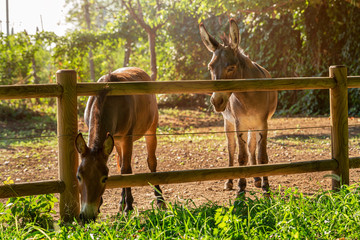Donkey and pony eat leaves in the fresh air. Green grass, summer, day