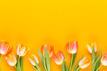Spoed Foto op Canvas Tulp Yellow pastels color tulips on yellow background.