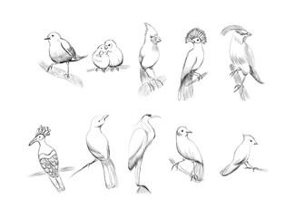 Birds set, hand-drawn illustration. Vector illustration of hand drawn different type of bird set