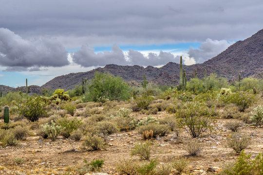 White Tank Mountain Scenes Near Phoenix Arizona