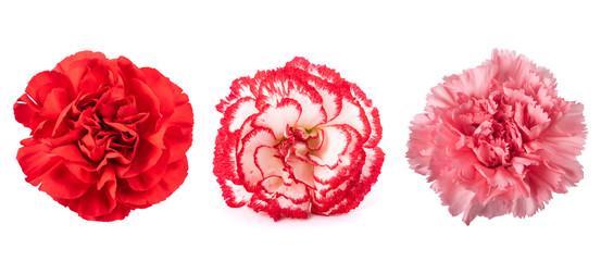 Spoed Fotobehang Bloemen Carnations mix